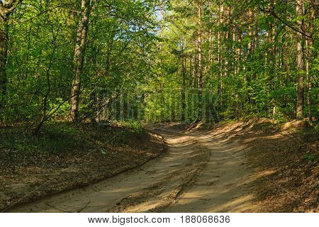 dirt road in summer or spring forest