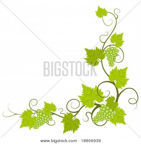 Grape vine frame.