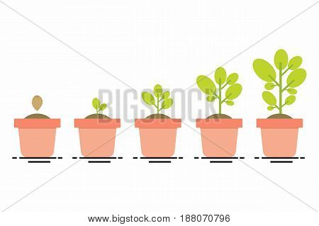 plant growing seedling gardening plant seeds sprout in ground phases plant growin evolution concept