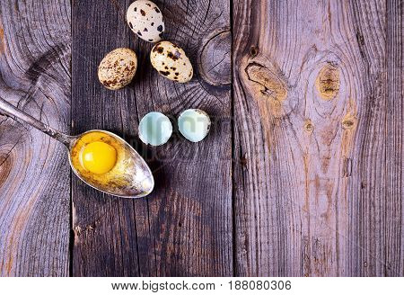 Yolk quail eggs in an iron spoon on a gray wooden background empty space on the right