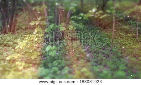 Deep Forest Fairy Tale Scene Fireflies 3D render.