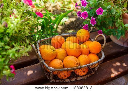Oranges in the basket on the bench