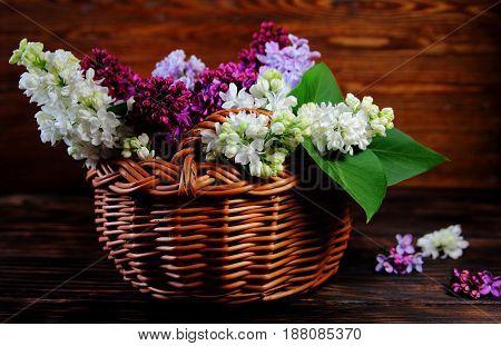 bouquet of lilac in a wicker basket