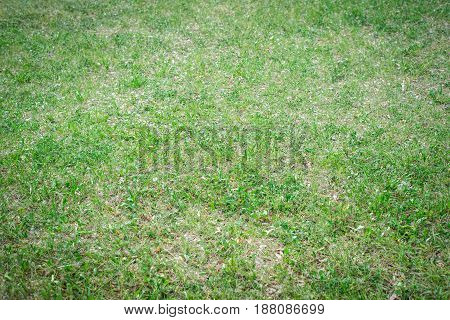 Natural Background, A Texture Of A Glade With Grass, On The Whole Frame. Horizontal Frame