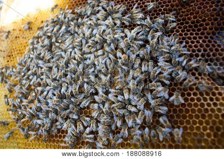 Background Texture And Pattern Of A Section Of Wax Honeycomb