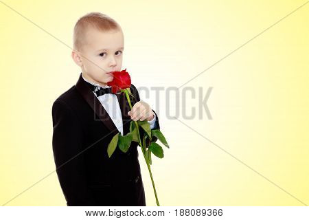 Beautiful little boy in a strict black suit , white shirt and tie.Boy holding a flower of a red rose on a long stem.On a yellow gradient background.