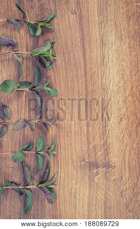 Vintage Photo, Mint Leaves, Healthy Lifestyle Concept, Copy Space For Text On Rustic Board