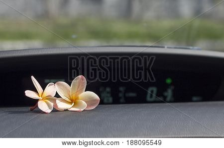 Two plumeria flowers on the car console.