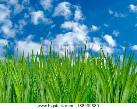 Fresh grass over blue sky with clouds