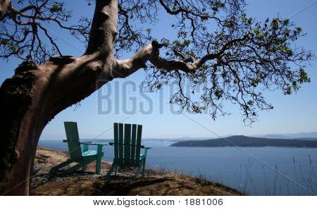 Arbutus Tree Overlooking Ocean