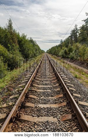 Single-track railway in the forest in summer