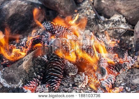 Burning cones in a fire close up