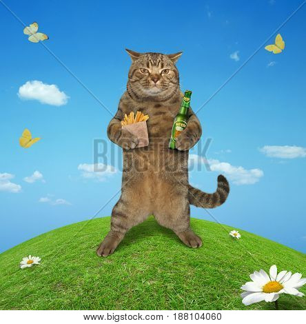 The cat is holding a bottle of beer and a paper bag of fried potatoes in the meadow.