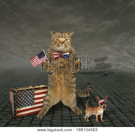The cat with an American patriotic bow tie is holding an American flag. His friend dog is next to him.