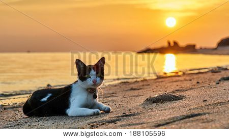 Cat on a beach at sunset. Koh Phangan. Thailand