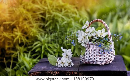 White wicker basket flowers forget-me-nots and Apple on a green natural background in Sunny day.
