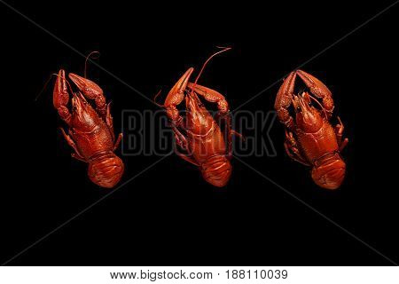 Three Boiled Crayfishes Isolated On Black