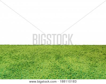 green grass or turf on white background