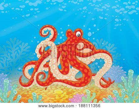 spotted octopus on a seabed with corals