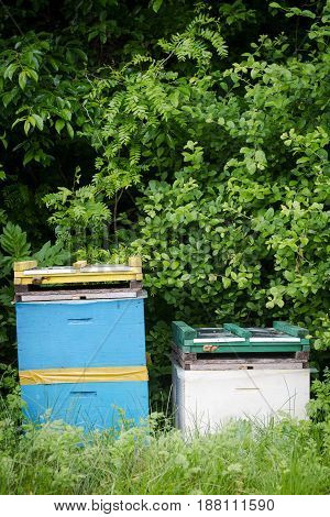 vertical front view of two beehives by the edge of a green forest