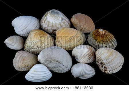 Assorted common sea shells isolated against a black background