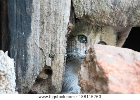 Grey kitten with piercing eyes looking from inside a hole in the wall