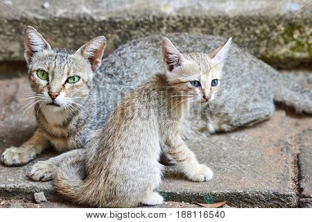 Cat with her young kitten sitting close together