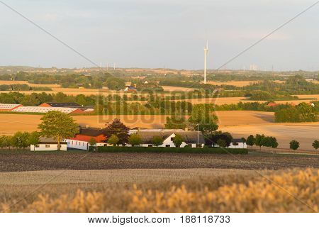 Hilly danish agricultural landscape with lots of wheat fields