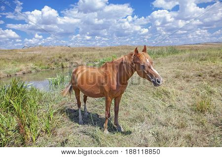 red horse grazing on the meadow near river