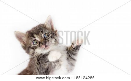 little cute gray fluffy frightened kitten isolated on white background with space for text