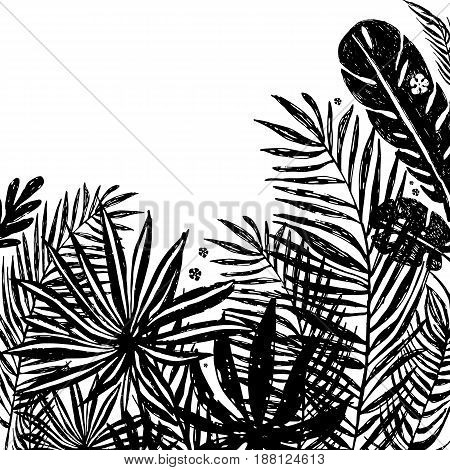 background with Black silhouettes of tropical plants. Vector botanical illustration, elements for design.