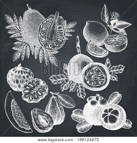 Vector collection of hand drawn tropical fruits illustration. Vintage set of leaves, fruits, flowers sketch white background. Exotic garden drawing on chalkboard