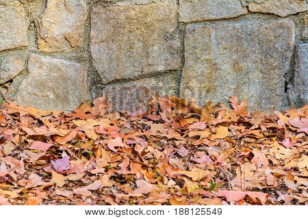 The rough stone wall and dry leaves in the autumn park