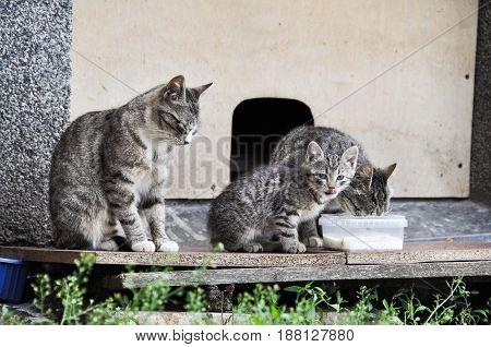 homeless cat with kitten eat on the street
