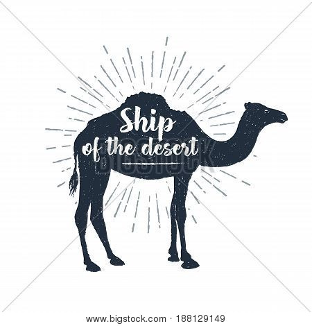 Hand drawn label with textured camel vector illustration and