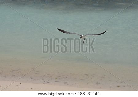 Beautiful tropical waters with a gull flying over it.