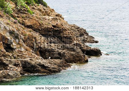photo of a seaside cliff with vegetation and seagulls in the distance