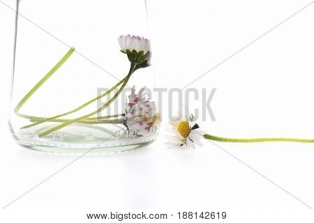 Flowers Of Tender Light Colours Placed In Transparent Glass Vase
