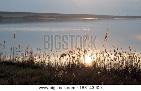 orange sun reflection in water of lake, golden bulrush and grass