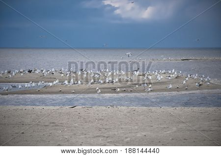 Gulls birds in the sky, beach, Baltic Sea, Latvia