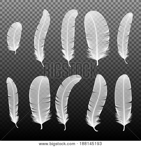 Set of various white bird feathers on a transparent background. Collection 3d realistic style soft fluffy macro swan vector illustration. Pen for handwriting