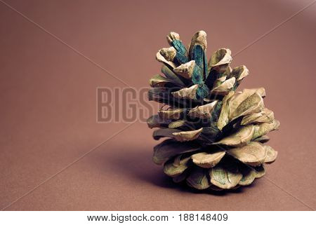 A pine cone on a red background.