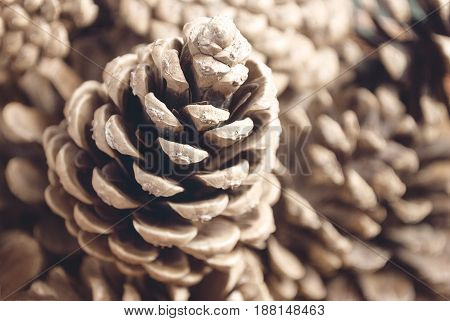 Pine cone on a blurry background, vertical.