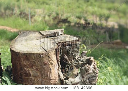 Stumps with the nature and green tree