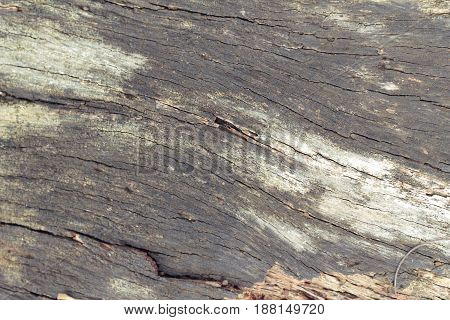 Old wooden beauty wall background and texture