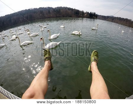 man lags above water feeding swans wide angle