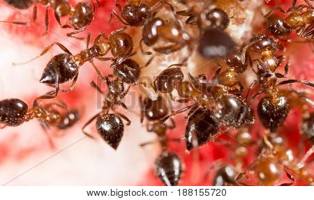 War of ants in nature. Macro photo
