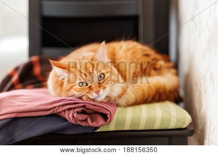 Cute ginger cat sleeps on a pile of clothes. Fluffy pet is dozing among cardigans. Cozy home background.