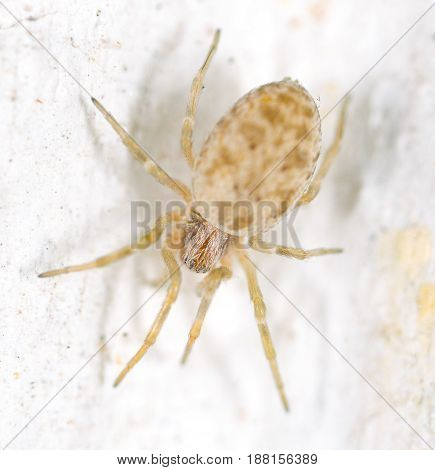 A spider on a white wall. macro