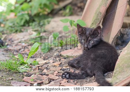 Close up of a cute black kitten